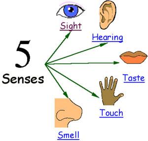 5 senses-26903594