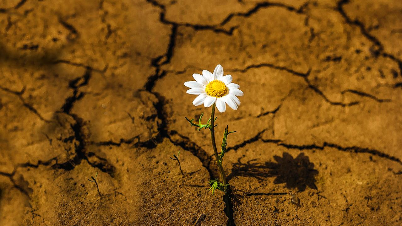 Flower in cracked ground