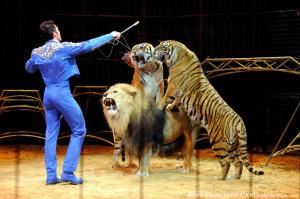 Lion tamer - facing lions