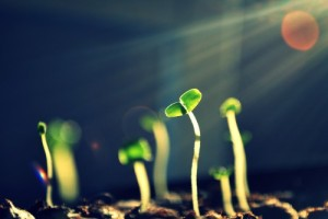 Plant your seed, water with zikr