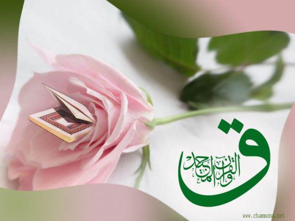 Qaf wal Quran al Majeed, Majid, pink flower