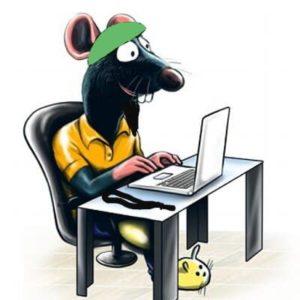 Rat on computer