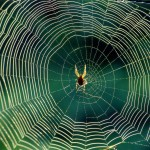 Spider-Web-6