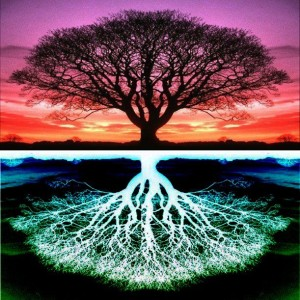 Tree f Life - Deep rooted