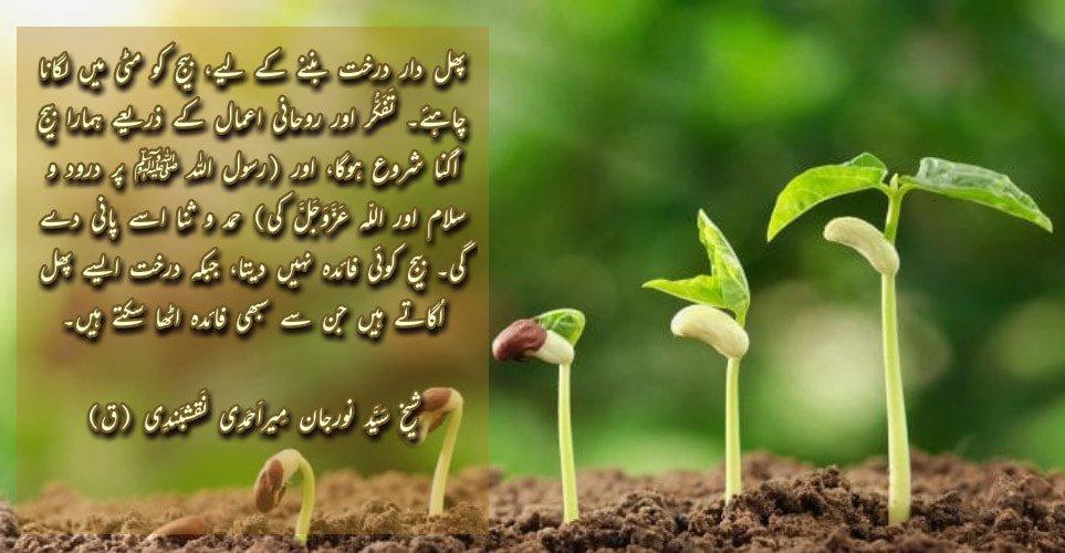 ShaykhTalk # 4- Don't Be A Seed, Plant Yourself And Grow!  بِسْمِ اللَّـهِ الرَّ...