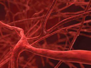 blood-vessels-closeup