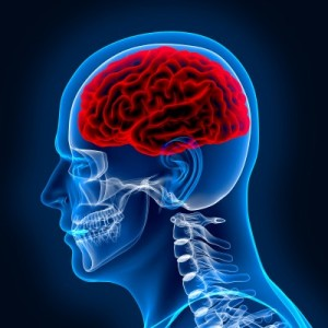 brain inside a skull