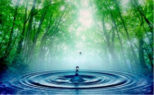 drop of water back to ocean trees