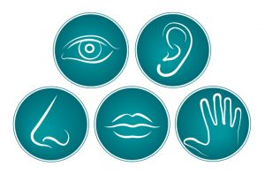 five-physical-senses