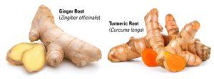 ginger root turmeric root