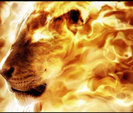 lionofDivine2