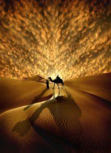 man walking camel in desert Naqatullah, she-camel
