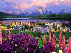 mountains flowers body of water