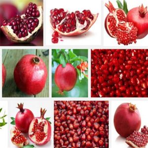 pomegranate - seed, tree - plant, fruit