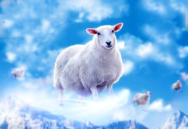 sheep mi'raj ascension qurban sacrifice