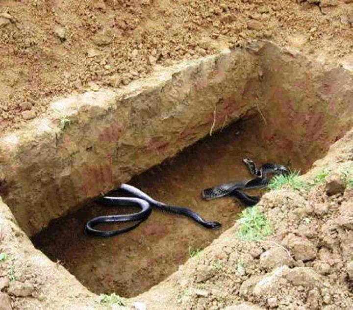 snakes in a grave